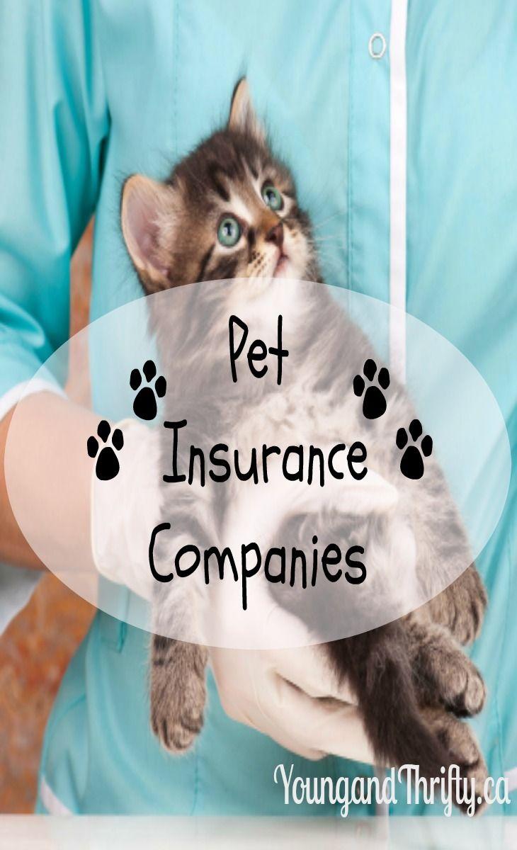 Best pet insurance companies in canada 2019 dog