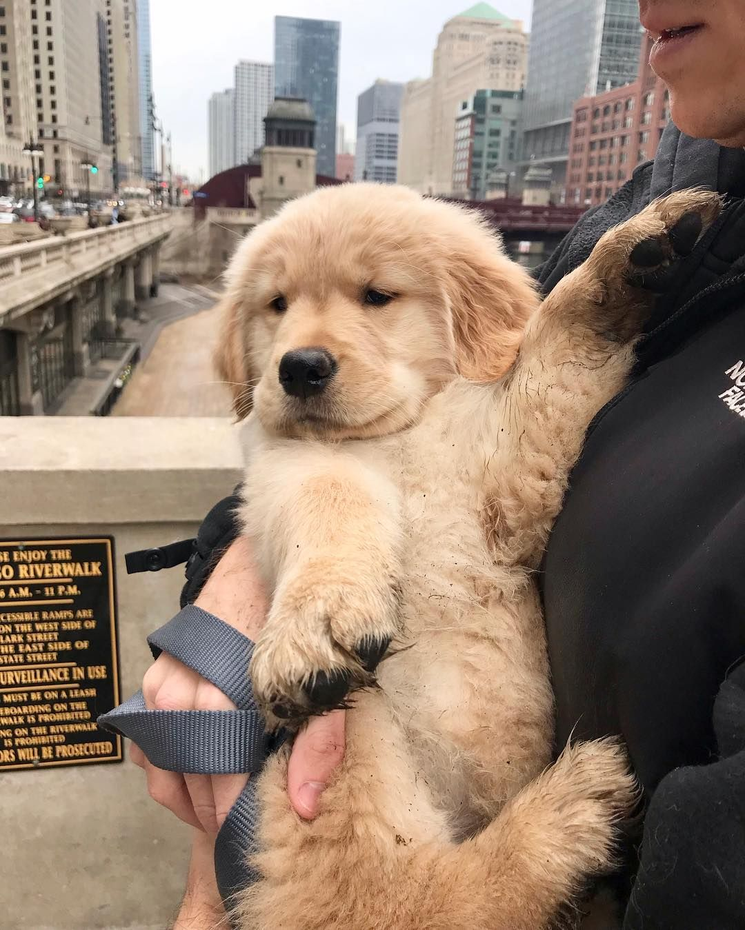 Napa The Golden On Instagram I M A Little Bigger And A Little