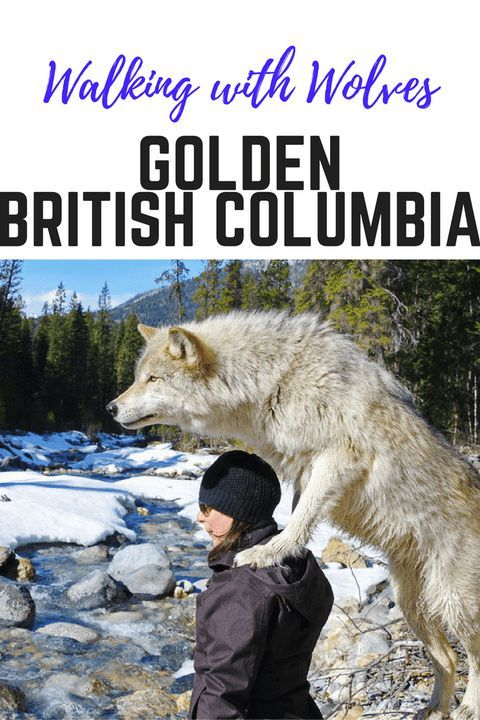 The Most Unforgettable Walk You'll Do - in Golden, BC - Hike Bike Travel  #traveltips #travelphotography #traveldestinations #travelhacks #travelguide #packing #packingtipsfortravel #adventuretravel #travelinspiration #europe #asiatravel #america