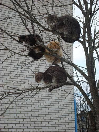Весна! Коты прилетели!!!
