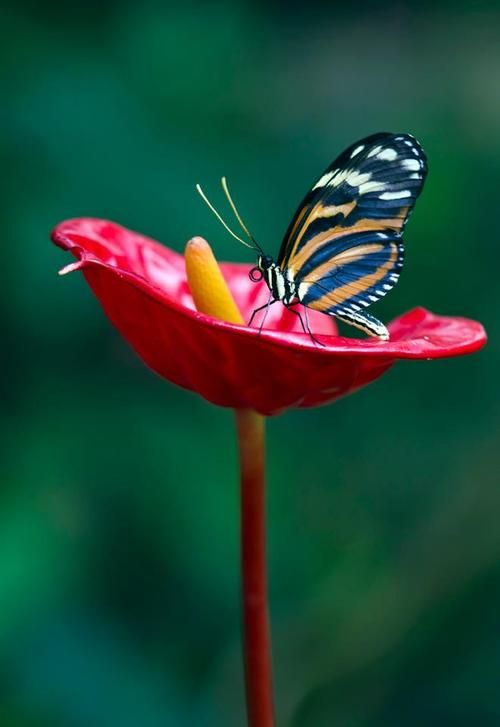 A butterfly inside flower #butterflies #garden #nature