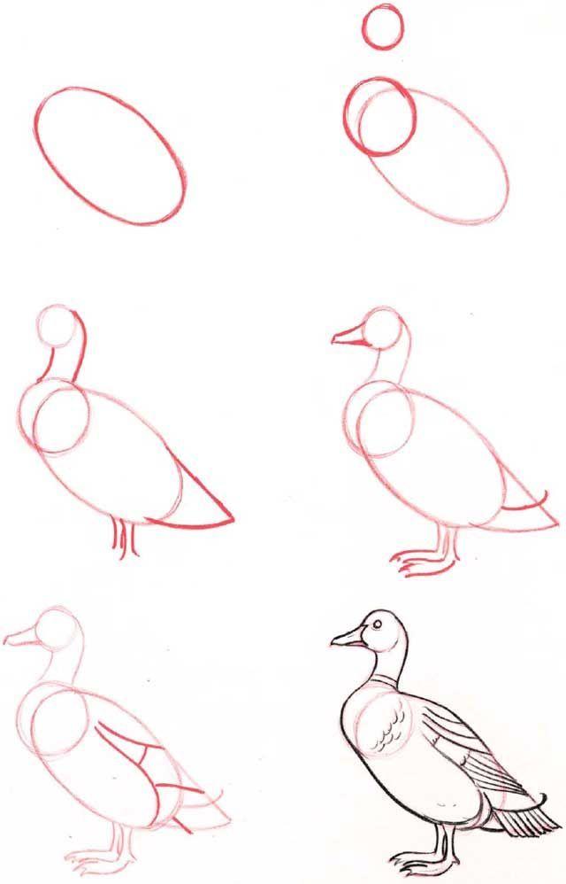 Pato desenho   life is art   Pinterest   Dibujo, Dibujar y Bocetos