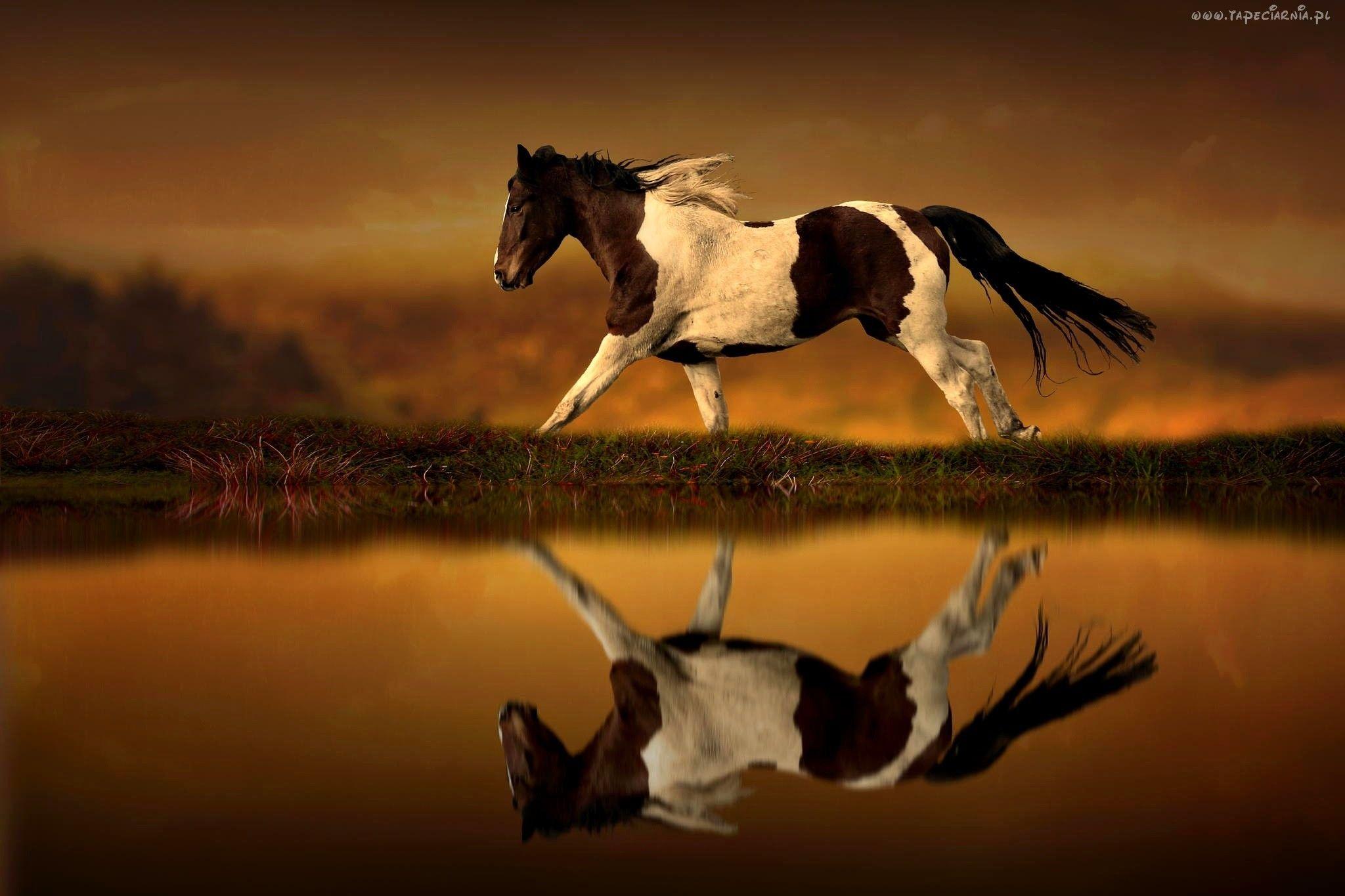 Koń Zachód Słońca Woda Odbicie Konie I Tapety