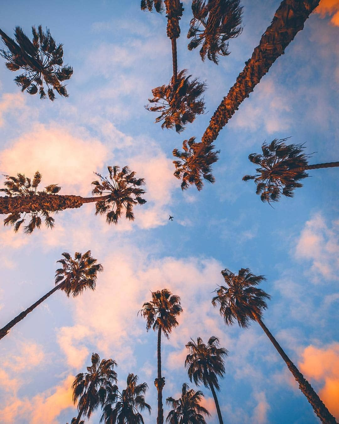 Palm trees and the sky Palm tree iphone wallpaper