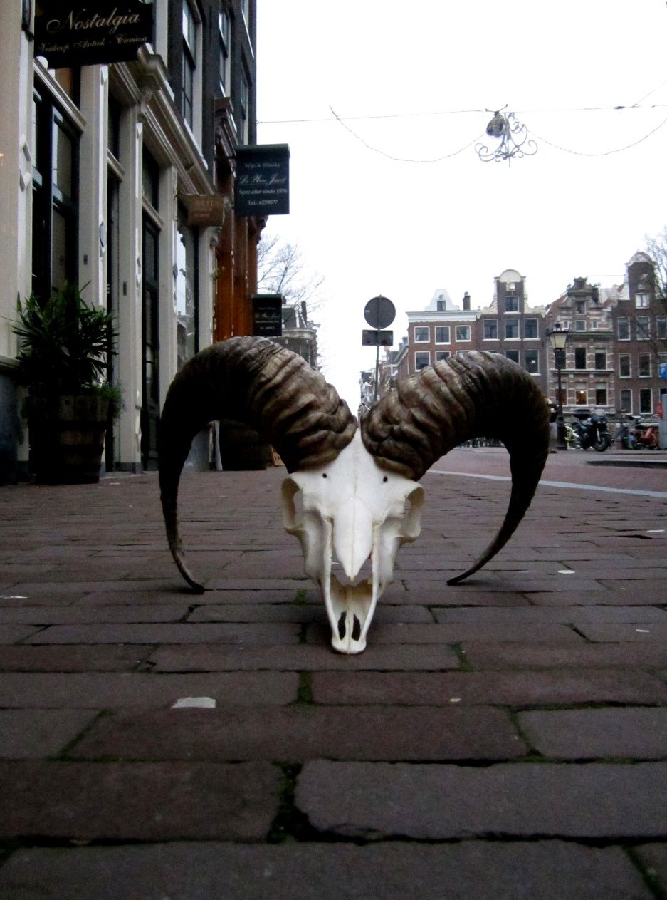 Buffalo at Amber35  Herenstraat 35 | Amsterdam