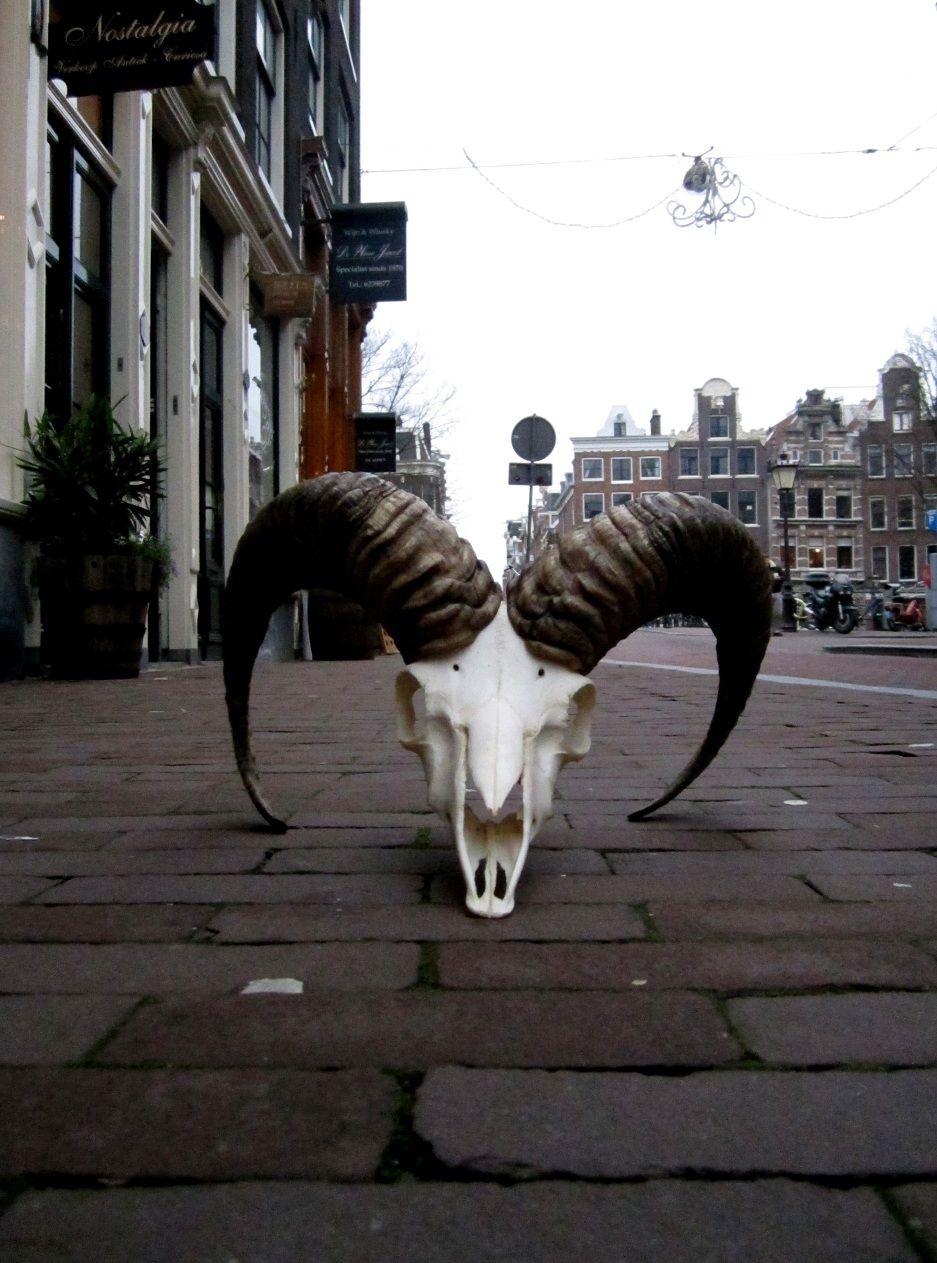 Buffalo at Amber35  Herenstraat 35 | Amsterdam