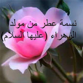 نسمة عطر من مولد الزهراء عليها السلام Flowers Blog Posts Blog