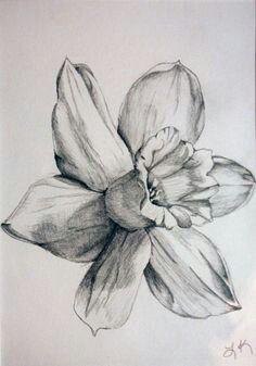 92e0aca4a December birth flower | Tattoos | Daffodil tattoo, Narcissus tattoo ...