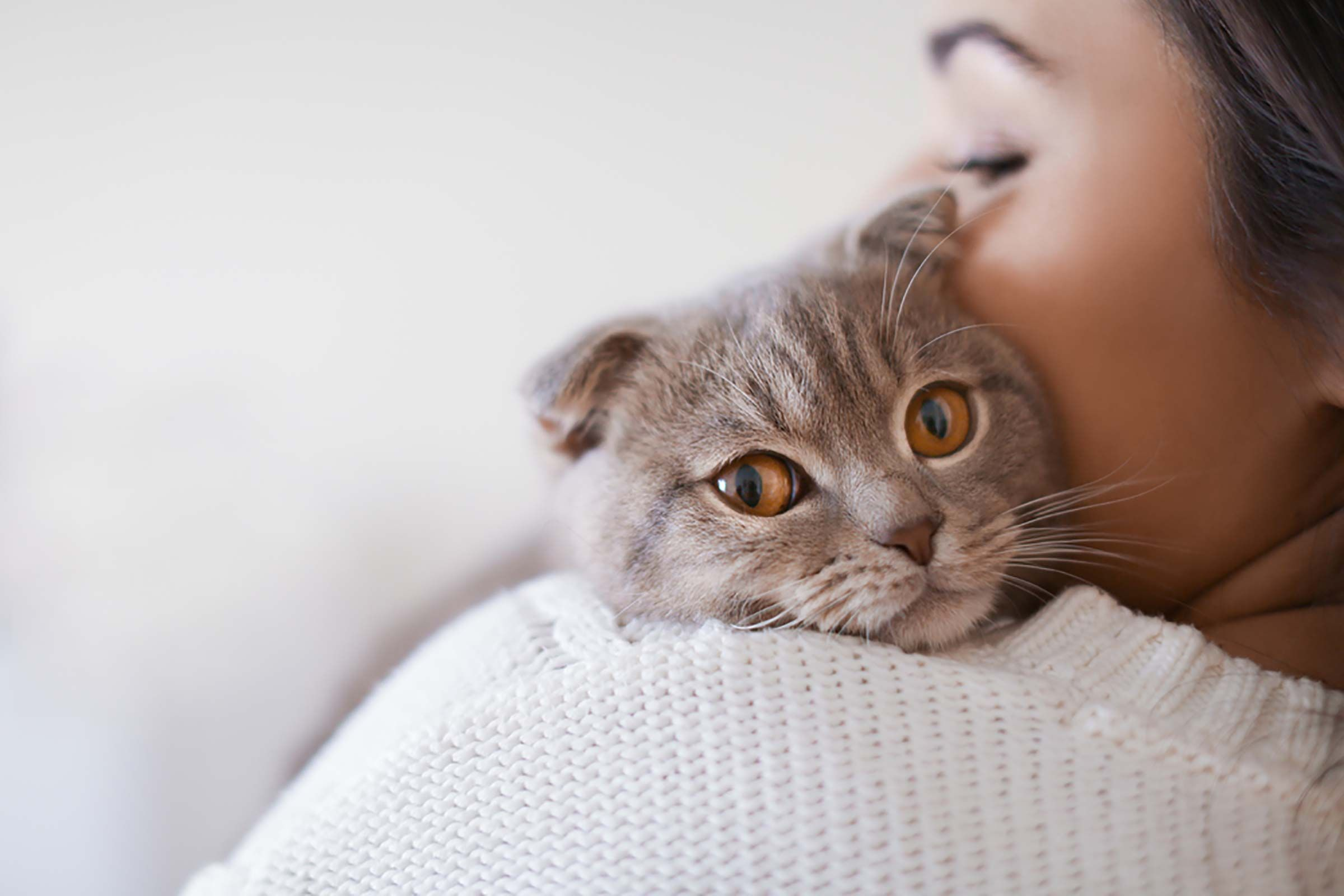 83b9177cfb414560474bb1f7d2b7e0e4 - How Do You Get Your Cat To Like You