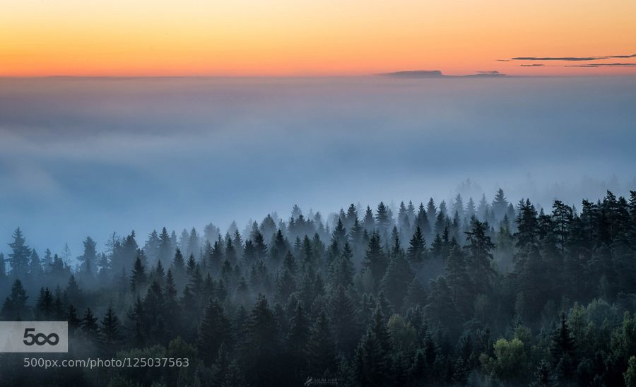 Sun is rising behind the misty forest scenery at Aulanko Nature reserve Hämeenlinna Finland. If you want to see more my work  Check out my Facebook page