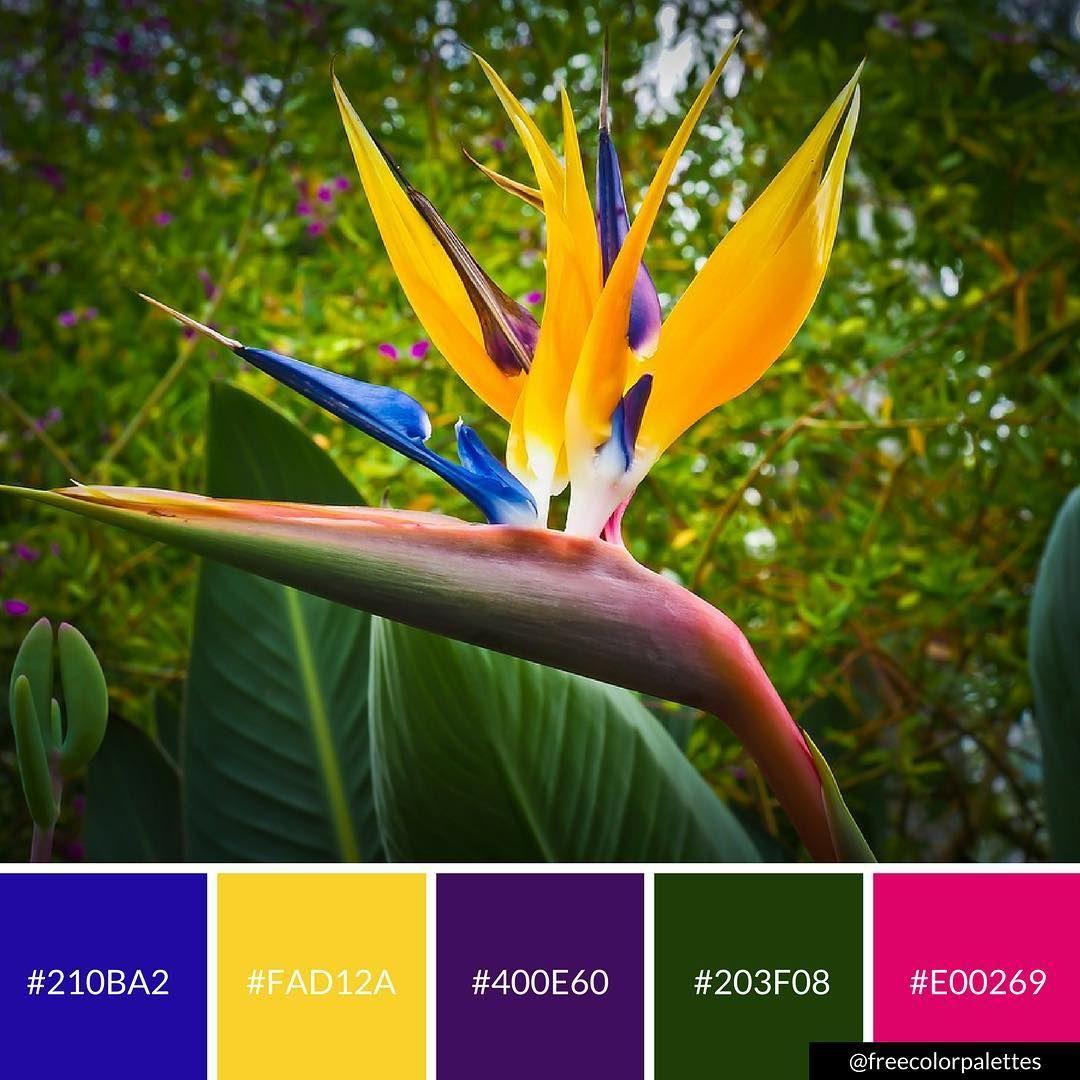 Bird Of Paradise Bold Deep Vibrant Color Palette Inspiration Digital Art Palette Birds Of Paradise Flower Bird Of Paradise Wedding Birds Of Paradise