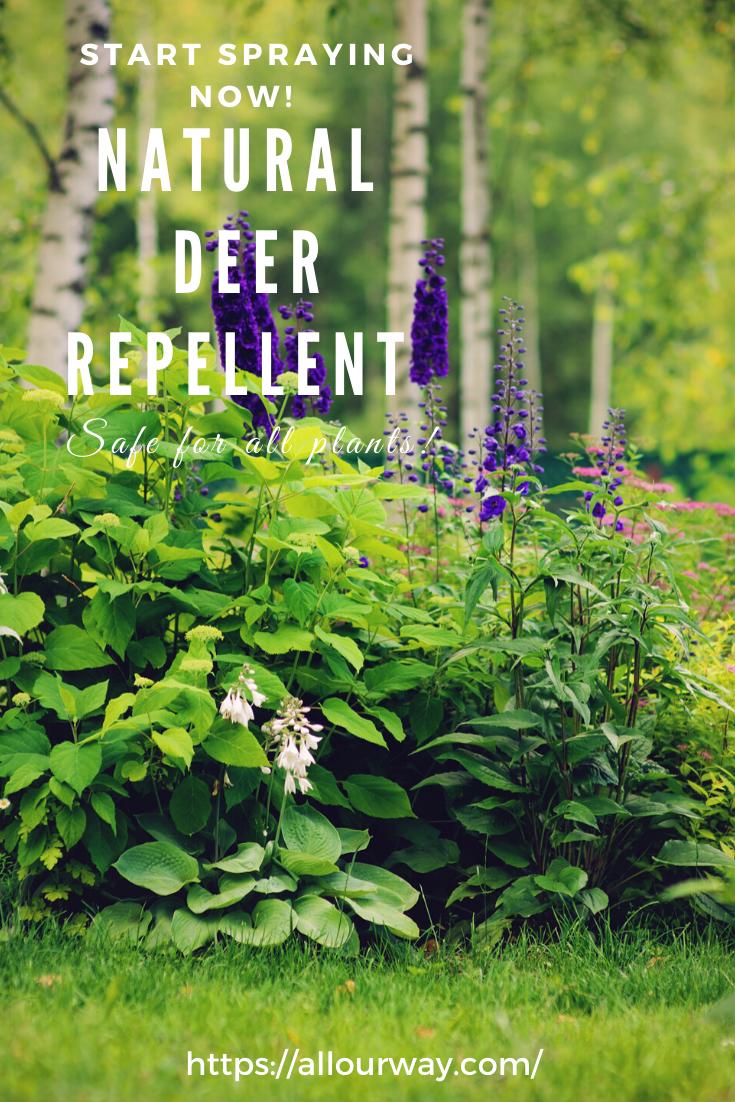 Battle With The Deer A Natural Deer Repellent In 2020 Deer Repellant Plants Deer Repellant Plants