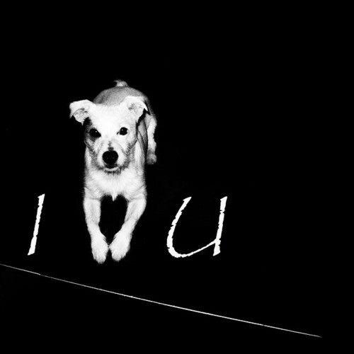 Pin By Erin Vega On Pittie Mama 3 Dog Love Dogs Cute Animals