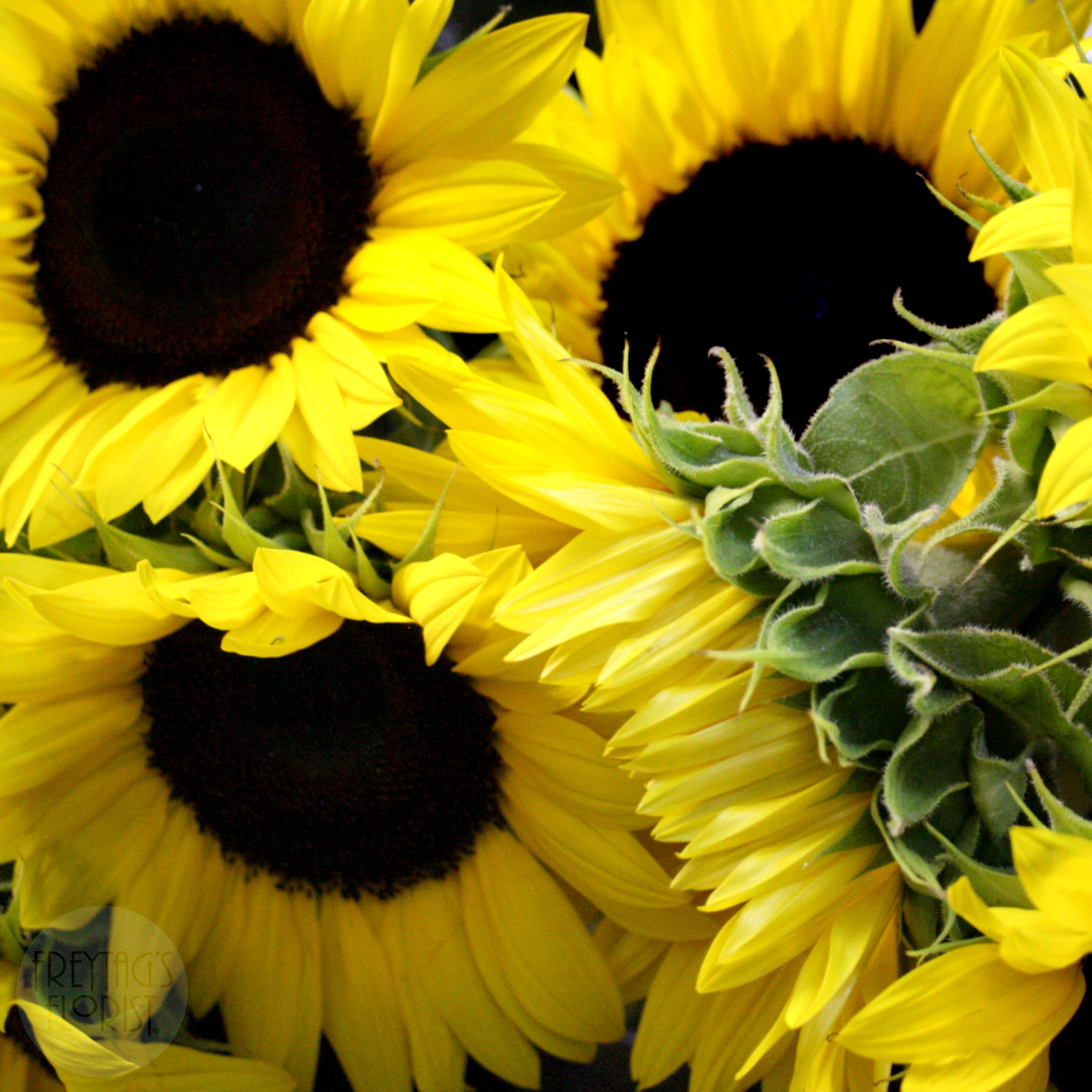 Sunflowers Freytag's Florist Austin, TX Austin