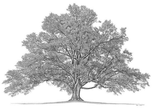17 Best images about Family Tree & Geneology on Pinterest ...
