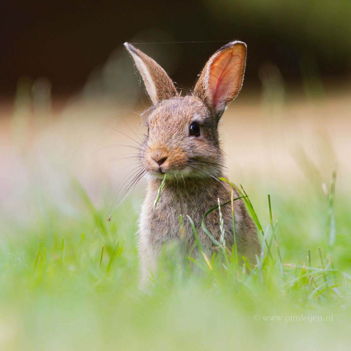 Cute Rabbit By Pim Leijen On 500px Criatura Y Conejos
