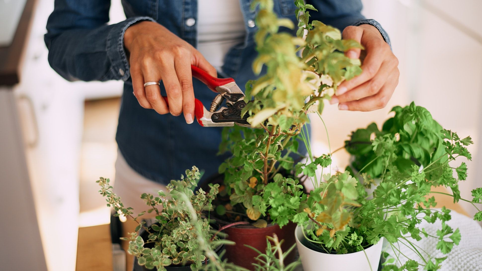 9 Houseplants That Can Help Repel Bugs Plants that repel