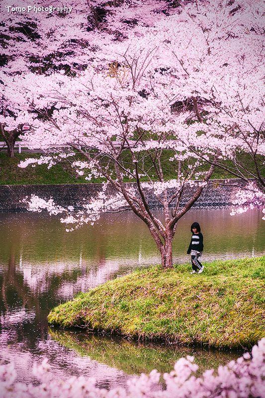 Little Girl Surrounded By Sakura By Windylife On Deviantart Japan Garden Spring Scenery Cherry Blossom Japan