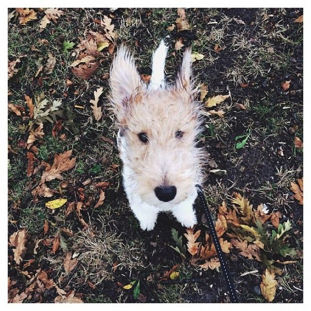 The lovely Mac was last week's #Dogoftheweek. Will your dog be this week's? Enter them at townandcountrymag.co.uk #dogs
