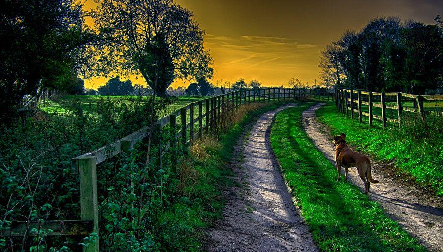 Dog Walk By Bob Riach On 500px Dog Walking Dogs Photo