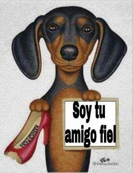Amigo Fiel Memes Perros Perros Y Cachorros Lindos Perros Chiguagua