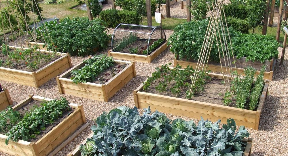 Backyard Vegetable Gardens