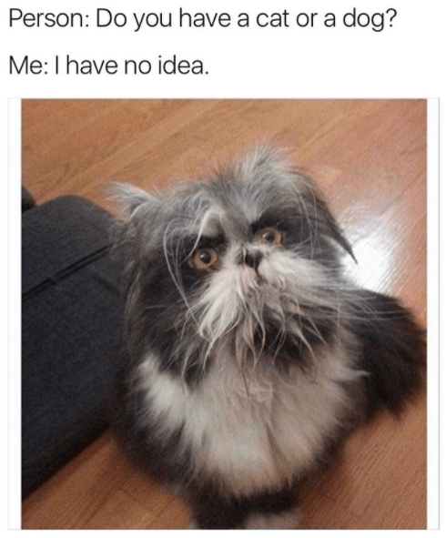 30 Animal Memes That Will Make You Laugh Until You Cry Funny Animals Funny Animal Memes Funny Cat Memes