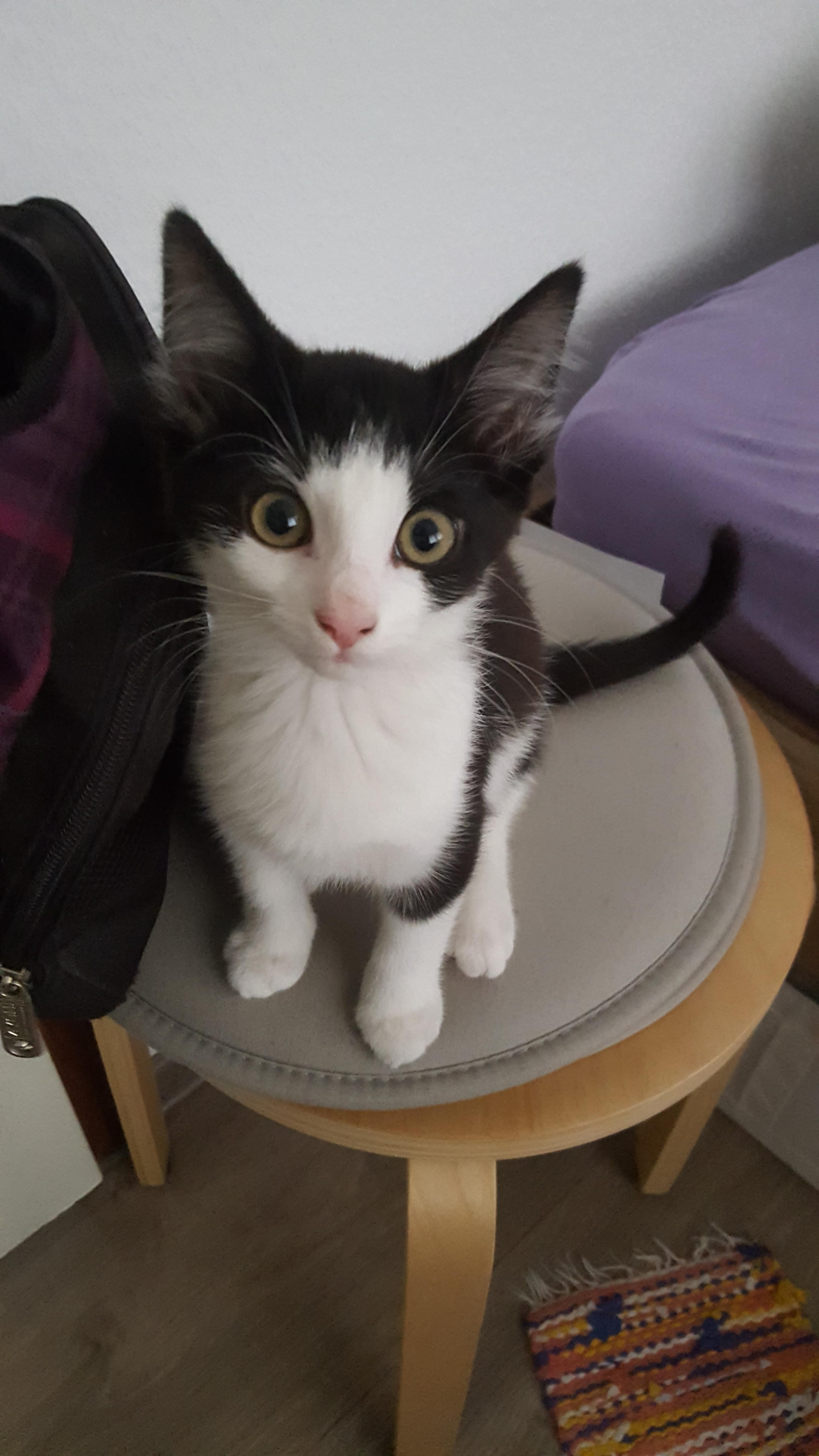 Fleur say hello to Reddit Cat selfie, Cats, Kitty