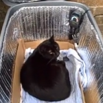 Pin On Cat Climbers Beds