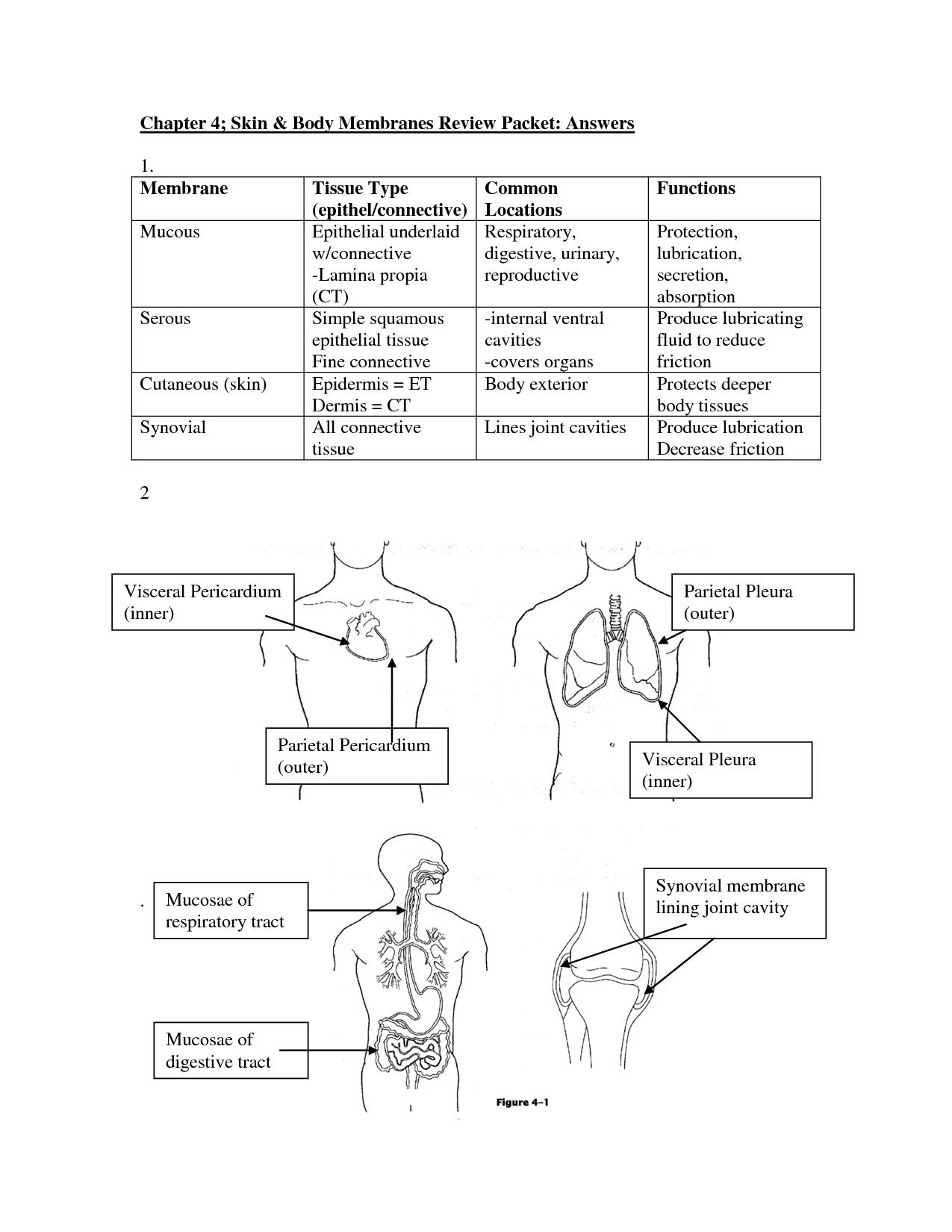 Atemberaubend Anatomy And Physiology Coloring Workbook Answers ...