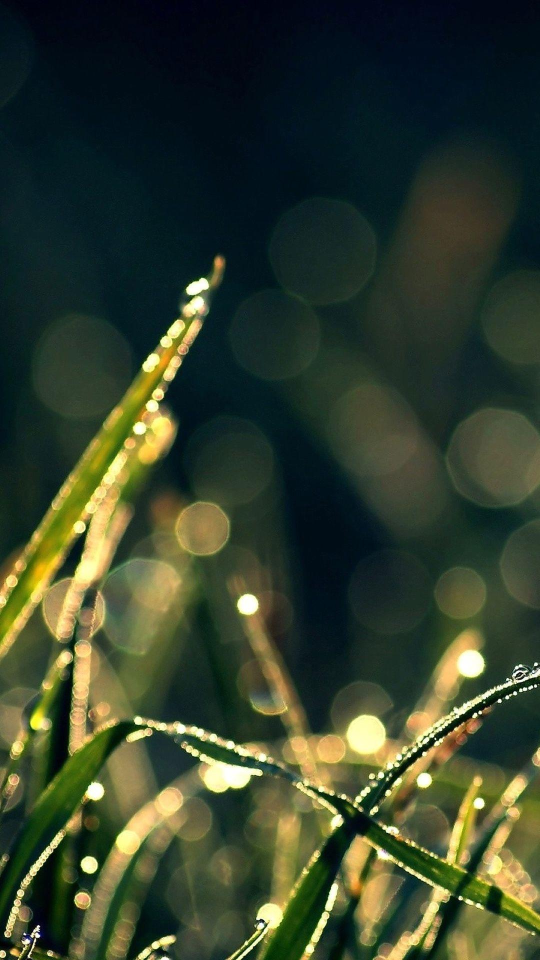 Bokeh Green Grass Drops Iphone 6 Plus Wallpaper