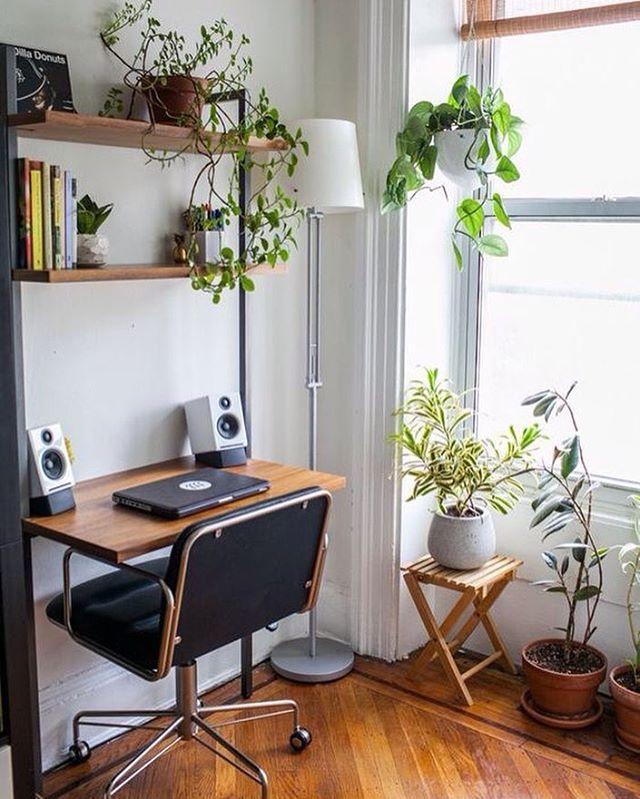 Resultado de imagem para decoração com plantas