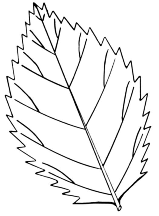 Leaf Coloring Pages Coloring Ville coloringpages Pinterest Leaves