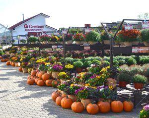 Gertens Garden Center Fall Displays Garden Center