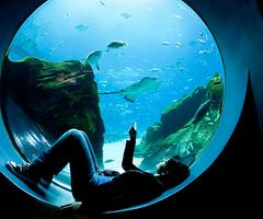 Aquariums 3 Public Aquarium Aquarium Fish Tank Aquarium