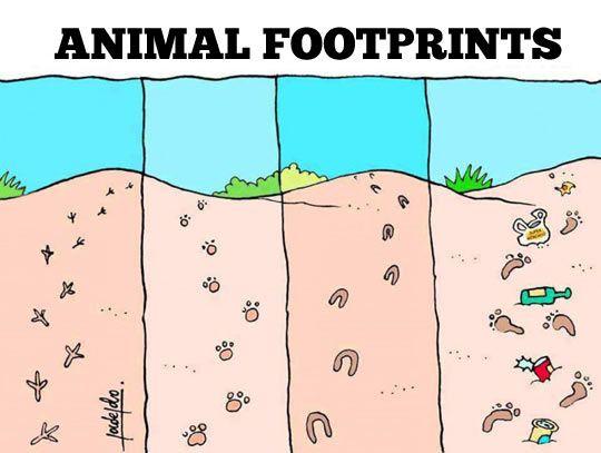 Types of animal footprints...