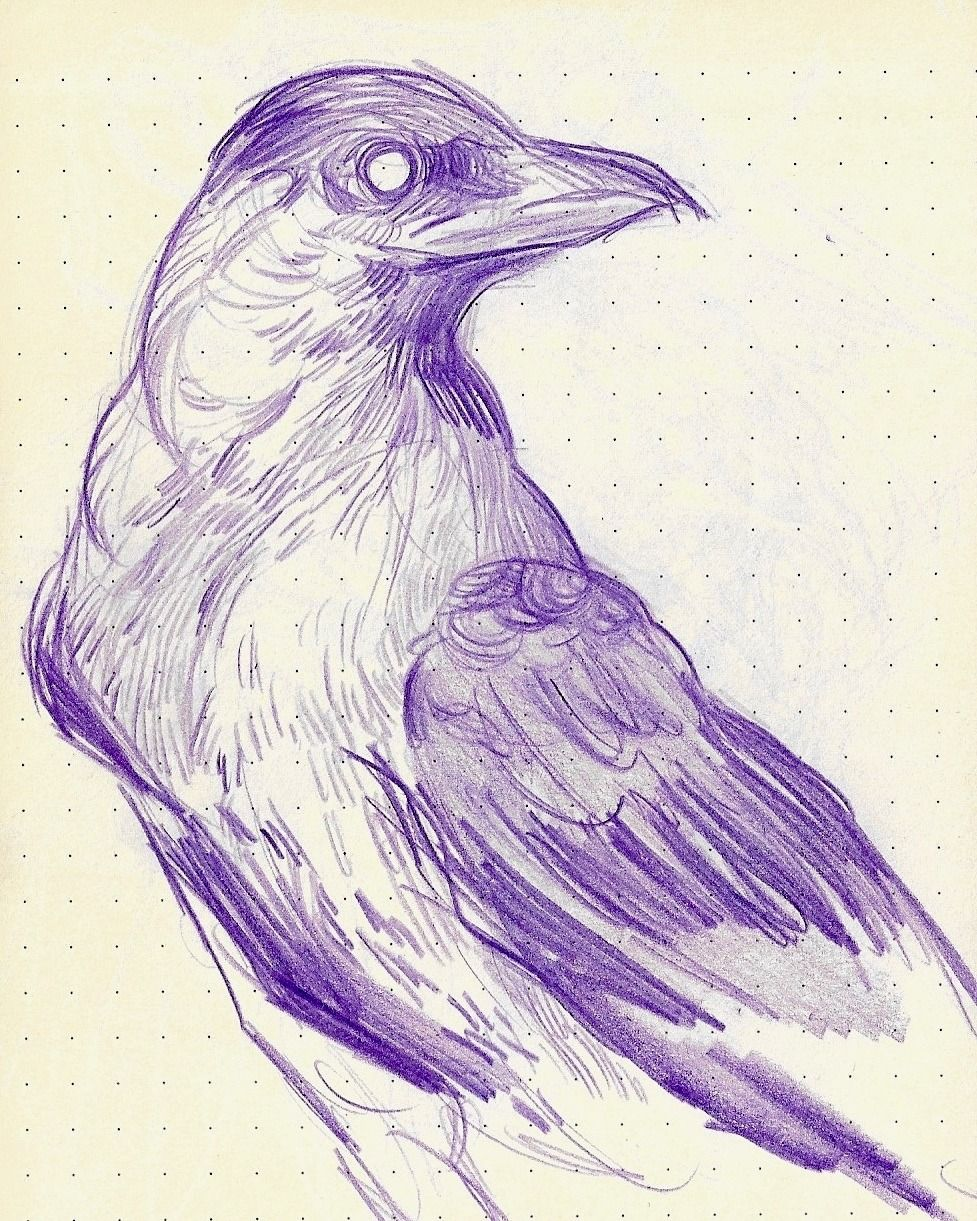Sleenfire A Quick Crow Sketch Because I Haven T Used Pencil In A While And I Miss It Crows Drawing Japanese Drawings Pencil Drawings