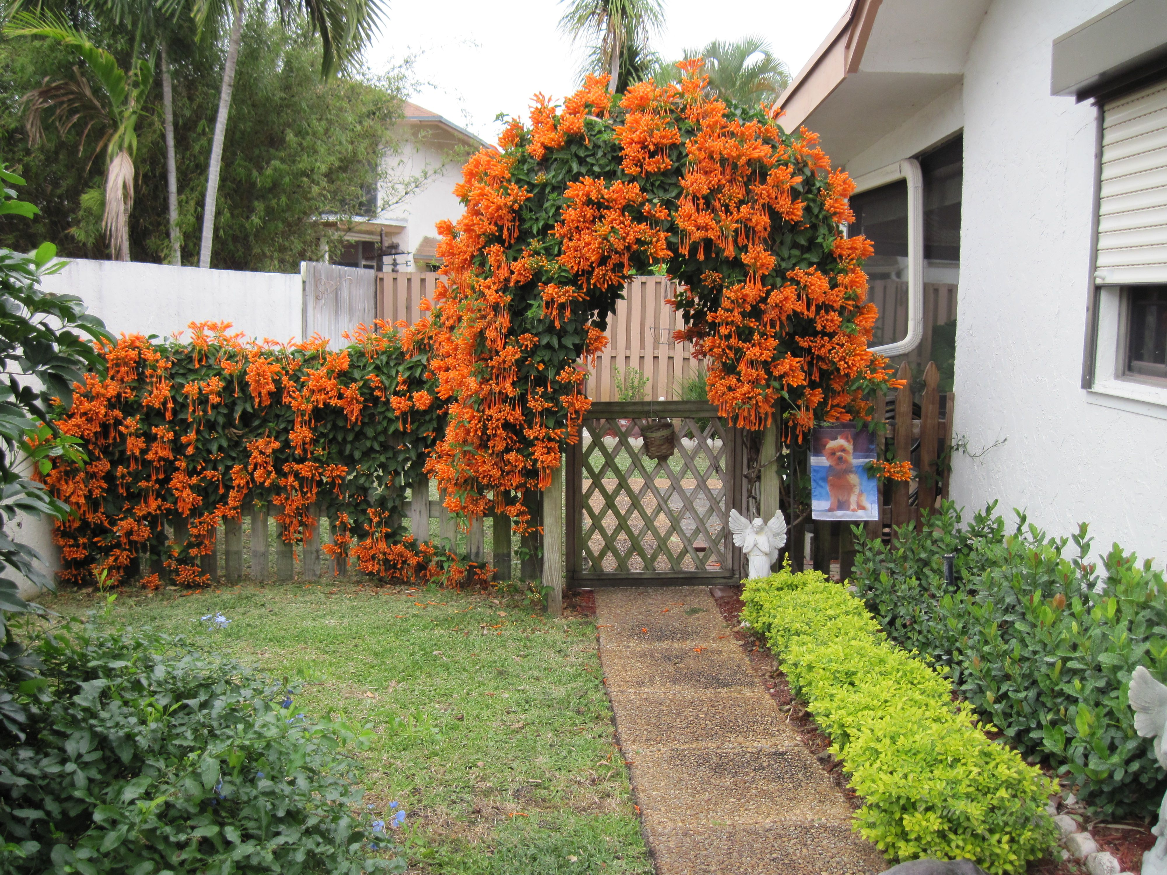 flaming Vine Arbor , Delray Beach, Florida | Gardening and Out ...