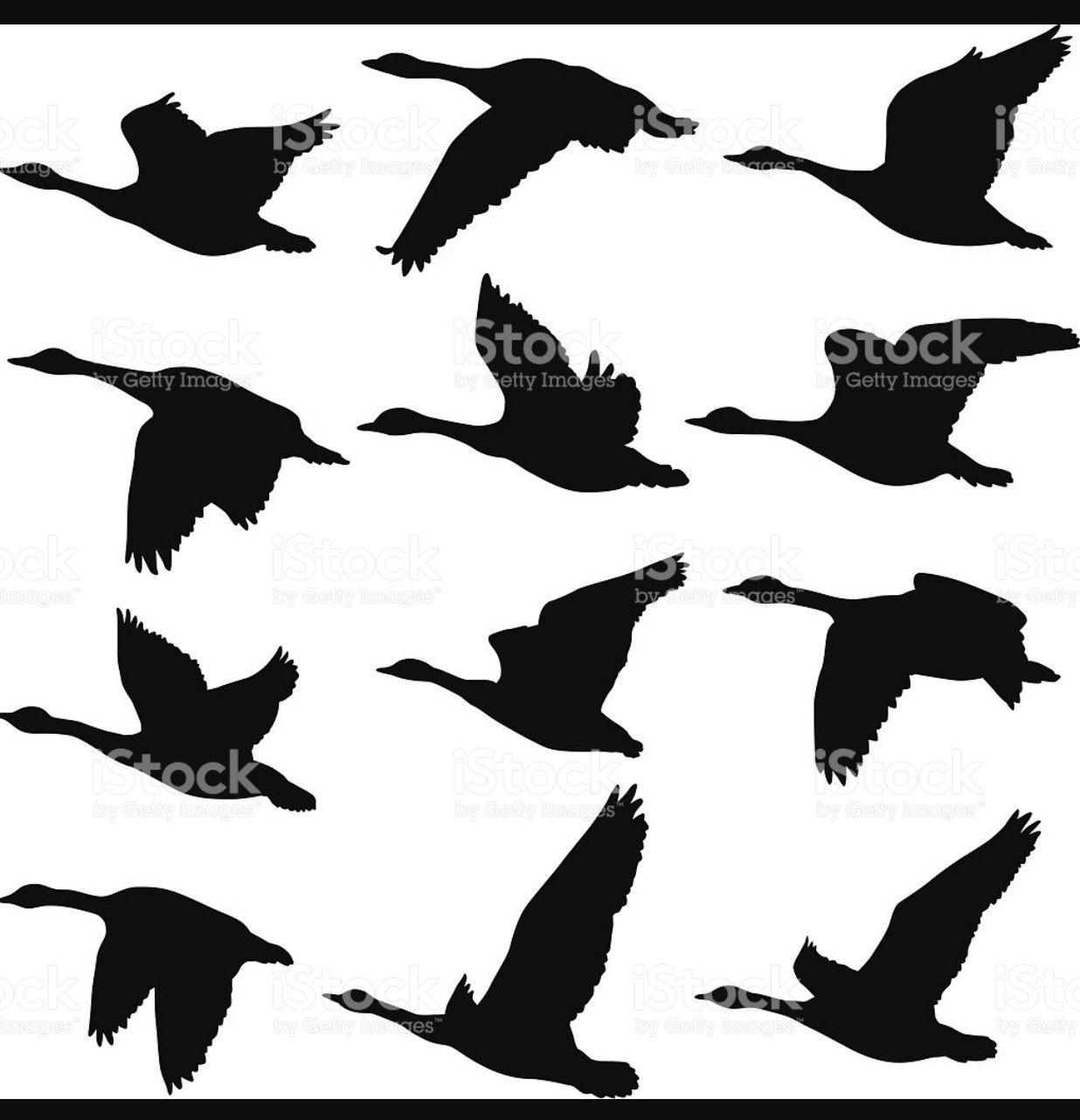 Pin Auf Bird Art