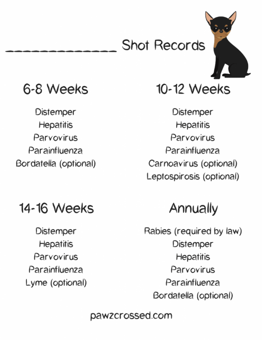 Free Shot Record Printable For All Your Puppies Shots It S Very Important To Keep Track Of Your Dog S Shots As You Ge Dog Shots Puppy Health Pet Health Record