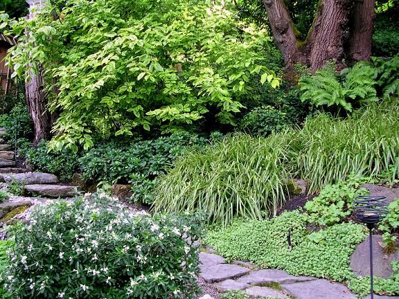 Pnw Ground Cover Google Search In 2020 Native Plant Landscape Pacific Northwest Garden Northwest Landscaping