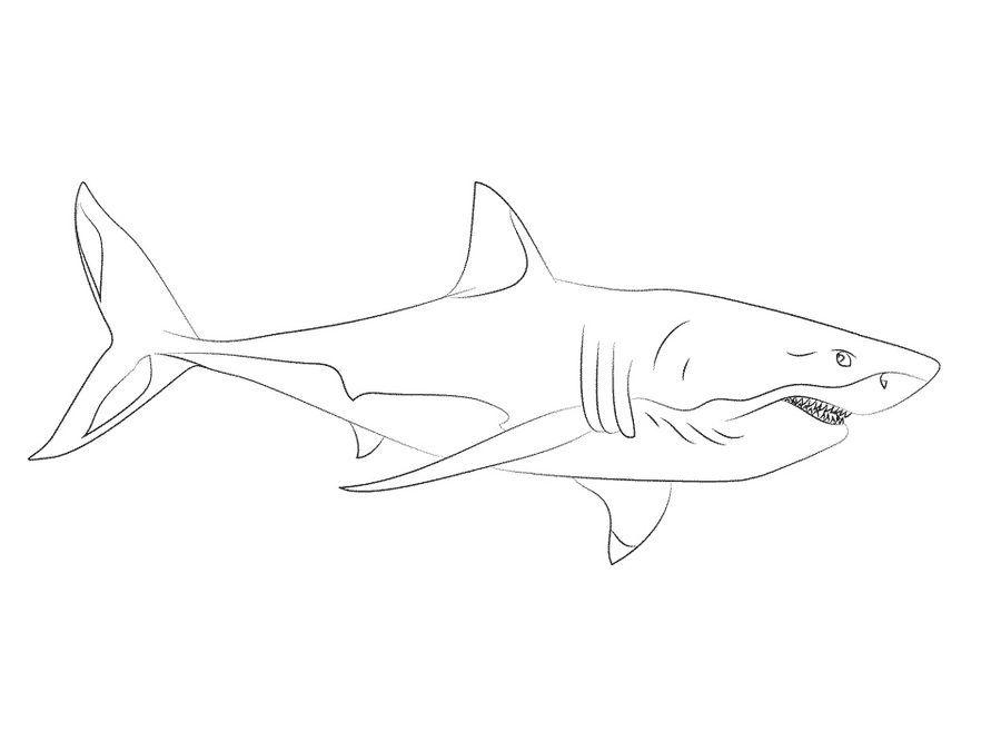 Dibujos Para Colorear Gran Tiburon Blanco Imprimible Para Los Ninos Y Los Adultos Recursos Faciles Med Tiburon Blanco Gran Tiburon Blanco Dibujo De Tiburon