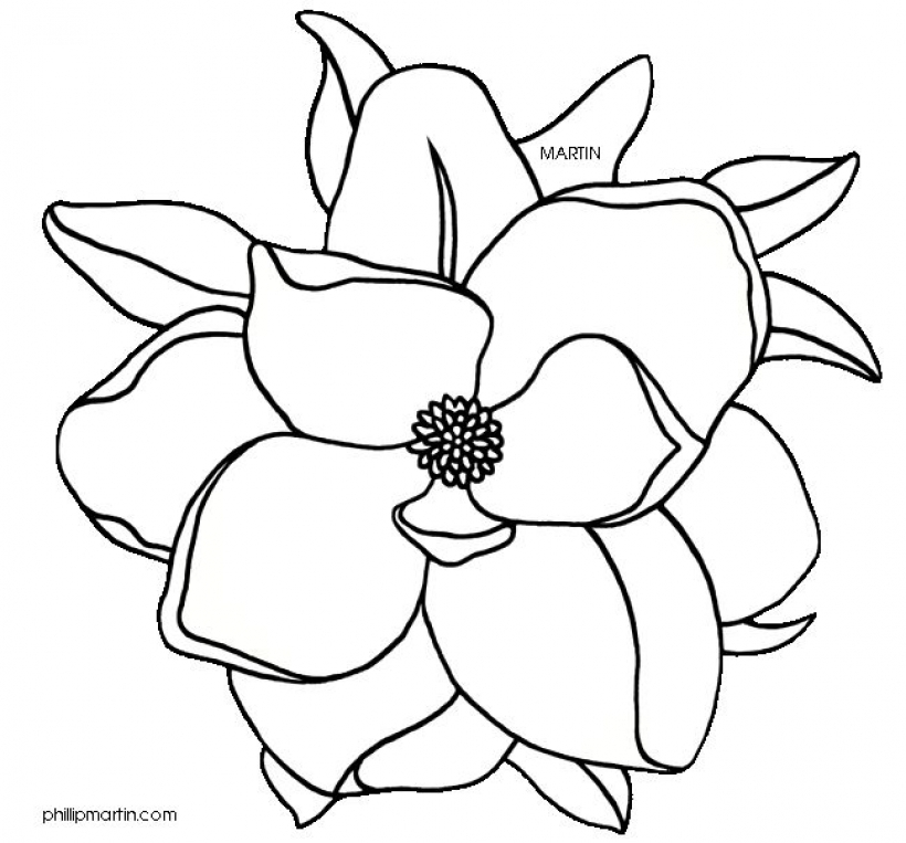 820x763 Magnolia Flower Clip Art Art Reference Magnolia Flower Outline Flower Drawing Magnolia Flower