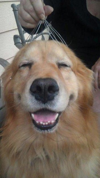 Dog gets a head massage...now that's happy