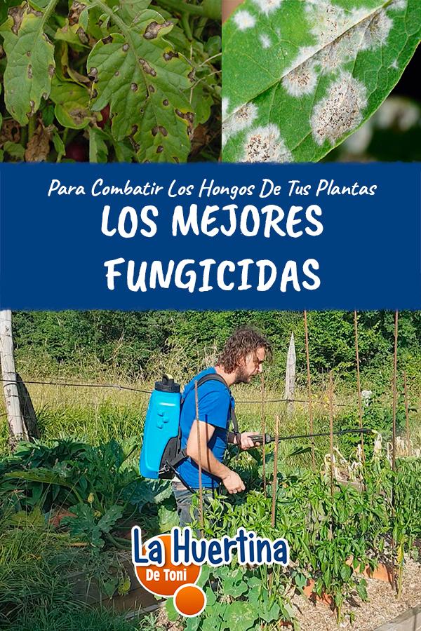 Los Mejores Fungicidas Para Combatir Hongos En Tus Plantas La Huertina De Toni Plantas La Huertina De Toni Cuidado De Plantas