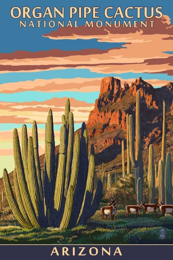 Organ Pipe Cactus National Monument, Arizona (6 Sizes Art Prints, Giclees, Posters, Wood & Metal Signs, Tote Bag, Towel)