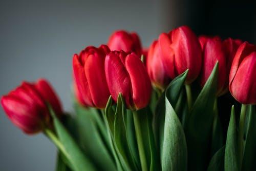 اجمل باقات الورد في العالم مميزة وجميلة Cheap Wedding Table Centerpieces Beautiful Bouquet Rose Images