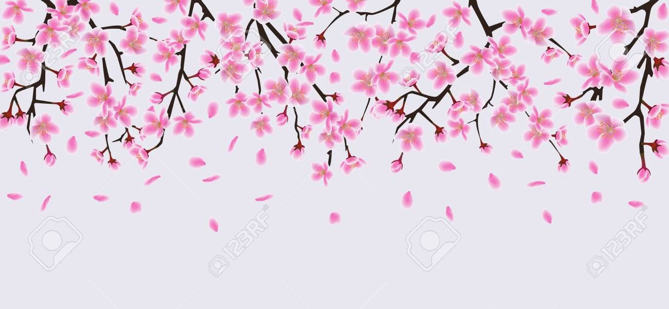 Sakura Tree Flower Branches With Realistic Pink Petals Falling Down Beautiful Cherry Blossom Top Border Element For Spri Sakura Tree Flower Branch Pink Petals