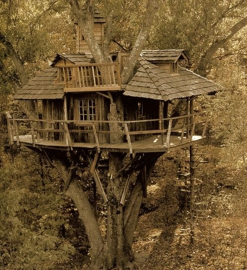 My children will have this tree house. And I will borrow it on the weekends