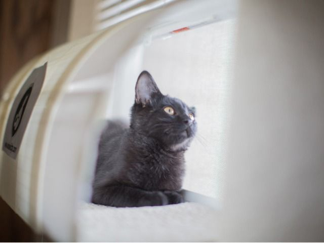 Windowkitty Cat Proof Your Blinds Protect Your Privacy S Video Poster Cat Proofing Cats Cat Tent